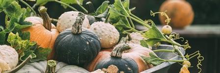 Different pumpkins close-up.